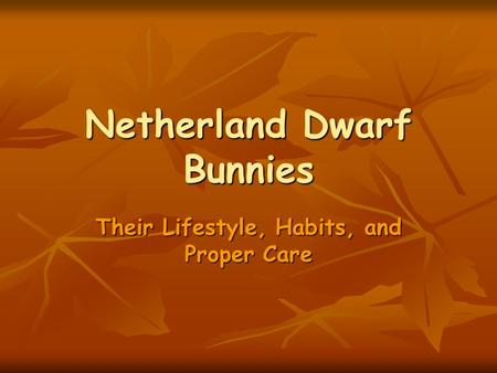 Netherland Dwarf Bunnies Their Lifestyle, Habits, and Proper Care.