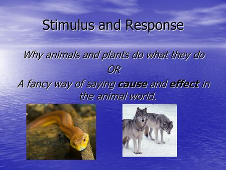 Stimulus and Response Why animals and plants do what they do OR A fancy way of saying cause and effect in the animal world.