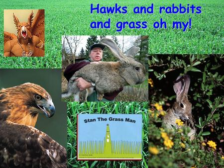 Hawks and rabbits and grass oh my! Questions to Ponder How do organisms interact with each other in an environment? What should an ideal population look.