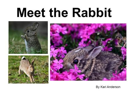 Meet the Rabbit By Kari Anderson.