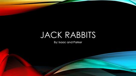 JACK RABBITS By: Isaac and Parker TABLE OF CONTENTS Introductory paragraph : Main idea Paragraph 2 : Anatomy/Physical Description Paragraph 3: Locomotion[movement]