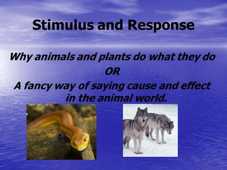 Stimulus and Response Why animals and plants do what they do OR