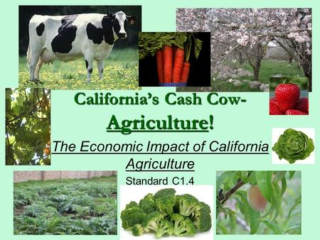 California's Cash Cow- Agriculture! The Economic Impact of California Agriculture Standard C1.4.