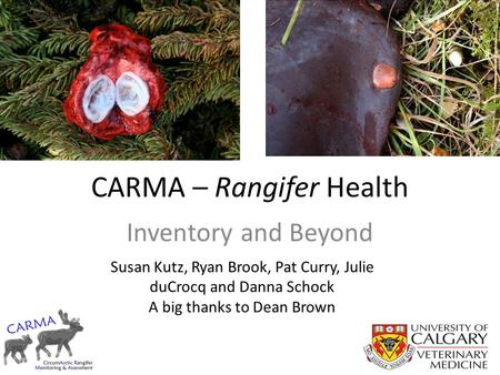 CARMA – Rangifer Health Inventory and Beyond Susan Kutz, Ryan Brook, Pat Curry, Julie duCrocq and Danna Schock A big thanks to Dean Brown.