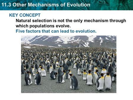KEY CONCEPT Natural selection is not the only mechanism through which populations evolve. Five factors that can lead to evolution.