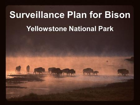 Surveillance Plan for Bison Yellowstone National Park.