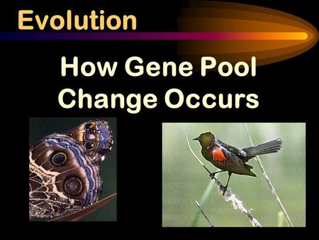 Evolution How Gene Pool Change Occurs. What exactly is a SPECIES? Species: Group of similar organisms that can breed and produce fertile offspring Example: