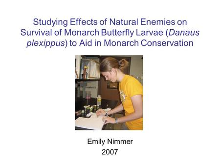Studying Effects of Natural Enemies on Survival of Monarch Butterfly Larvae (Danaus plexippus) to Aid in Monarch Conservation Emily Nimmer 2007.