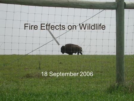 Fire Effects on Wildlife 18 September 2006. Direct Effects Few studies, marked re-capture approach ideal –Body size and mobility, i.e. burrowing, influence.