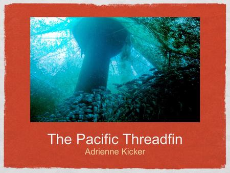 The Pacific Threadfin Adrienne Kicker.