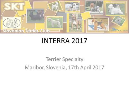 INTERRA 2017 Terrier Specialty Maribor, Slovenia, 17th April 2017.
