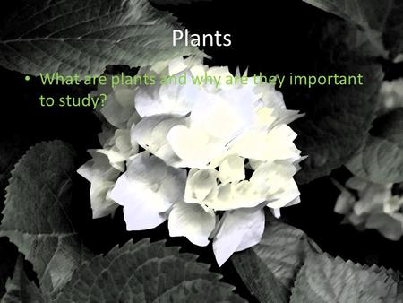Plants What are plants and why are they important to study?