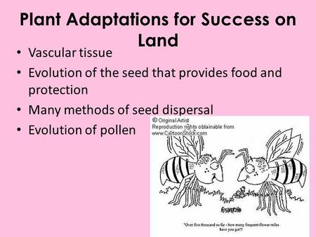 Plant Adaptations for Success on Land Vascular tissue Evolution of the seed that provides food and protection Many methods of seed dispersal Evolution.