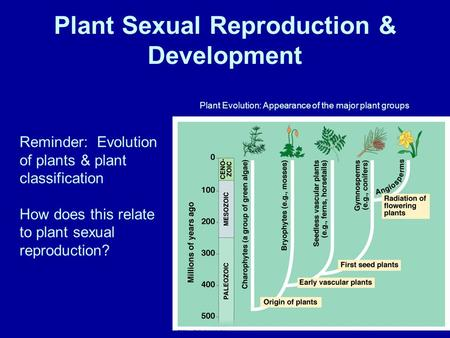 Plant Sexual Reproduction & Development Plant Evolution: Appearance of the major plant groups Reminder: Evolution of plants & plant classification How.