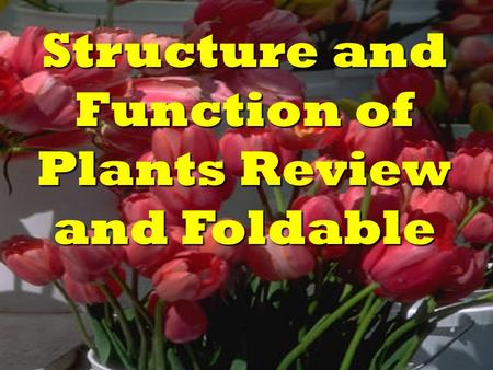 Structure and Function of Plants Review and Foldable.