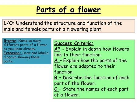 Parts of a flower L/O: Understand the structure and function of the male and female parts of a flowering plant Starter: Name as many different parts of.