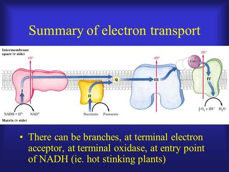 Summary of electron transport