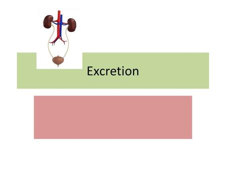 Excretion. Excretion is the elimination of waste substances from the blood. It's no the same as the elimination of faeces.