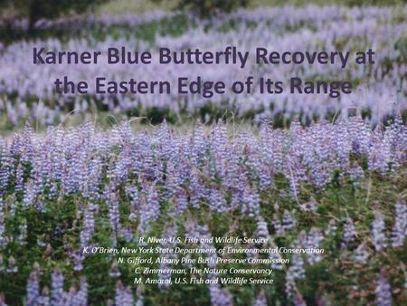 Karner Blue Butterfly Recovery at the Eastern Edge of Its Range R. Niver, U.S. Fish and Wildlife Service K. O'Brien, New York State Department of Environmental.