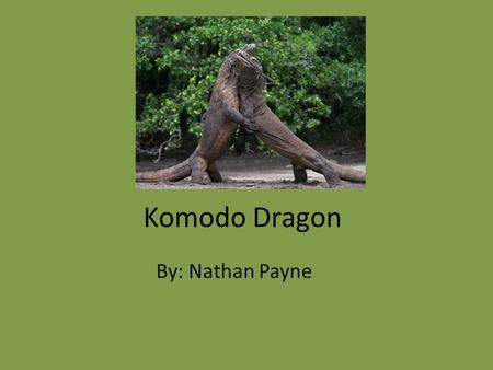 Komodo Dragon By: Nathan Payne. Classification and Description Varanus Komodoensis Reptile 8ft. to 10ft., 250lbs. To 300lbs. Gray, brown or reddish (adults)