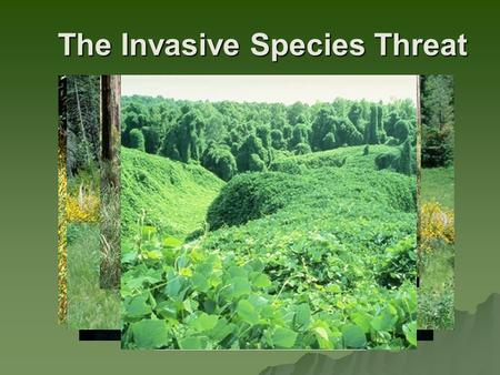 The Invasive Species Threat. The National Strategy and Implementation Plan for Invasive Species Management -Forests Out of Balance- The Impact of Invasive.