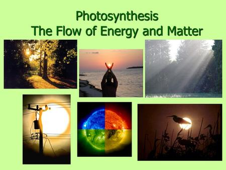 Photosynthesis The Flow of Energy and Matter. Nobody can really explain photosynthesis I'd like some super smart guy to explain how a little acorn becomes.