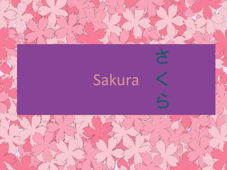 Sakura さくらさくら. Sakura or Cherry Blossom is the Japanese name for ornamental cherry trees and their blossoms.