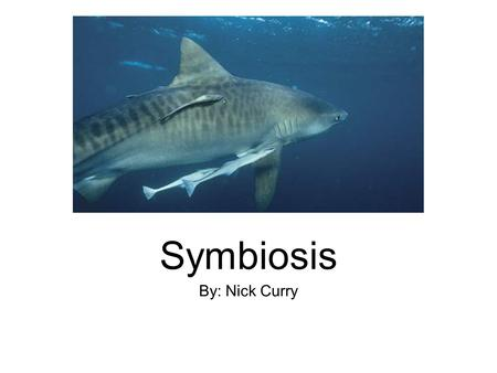 Symbiosis By: Nick Curry.