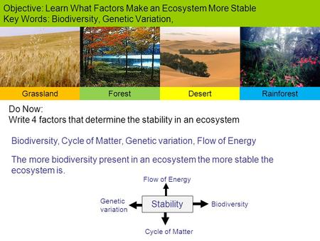 Biodiversity, Cycle of Matter, Genetic variation, Flow of Energy Objective: Learn What Factors Make an Ecosystem More Stable Key Words: Biodiversity, Genetic.