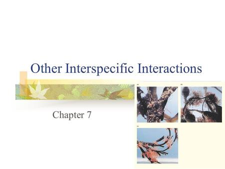 Other Interspecific Interactions Chapter 7. Interspecific Interactions Symbiosis - intimate association between individuals of different species, in which.