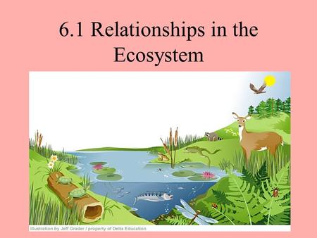 6.1 Relationships in the Ecosystem. Predators and Prey Predator= A consumer that actively hunts other living organisms. Prey= The organism that a predator.