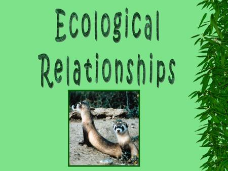 ❊ Ecology ❊ The study of the interaction of populations of living organisms with other populations and with the environment ❊ Population ❊ A group of.