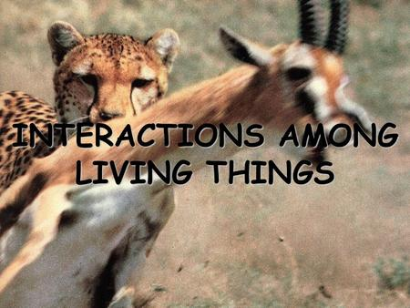 INTERACTIONS AMONG LIVING THINGS. A characteristic that makes an individual better suited to its environment may eventually become common in that species.