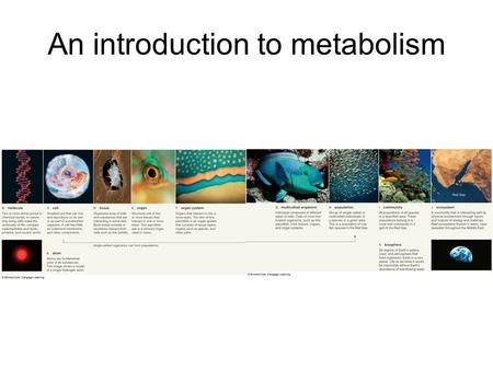 An introduction to metabolism. Totality of an organisms chemical reactions.