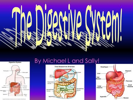By Michael L and Sally!. No a person could not survive with out the digestive system, because with out it you would not be able to get the nutrients and.