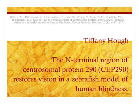 Tiffany Hough The N-terminal region of centrosomal protein 290 (CEP290) restores vision in a zebrafish model of human blindness. Baye, L.M., Patrinostro,