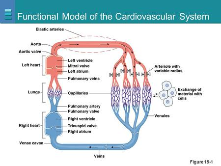 Functional Model of the Cardiovascular System Figure 15-1.