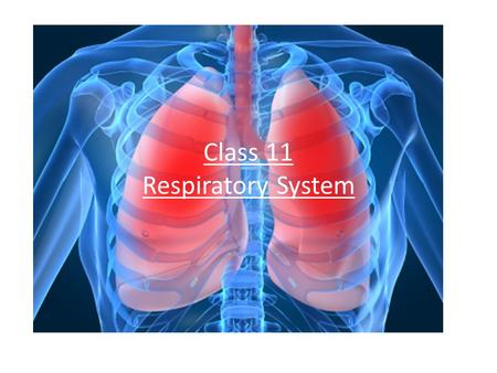 Class 11 Respiratory System. Respiratory System Functions Supplies cells with oxygen Rids the body of carbon dioxide Also brings scents to the nose Vibrates.