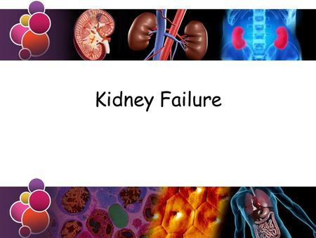 Kidney Failure. Learning Objective Success Criteria To know about kidney failure Outline the problems that arise from kidney failure and discuss the use.