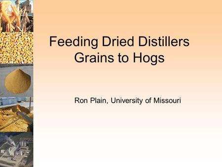 Feeding Dried Distillers Grains to Hogs Ron Plain, University of Missouri.