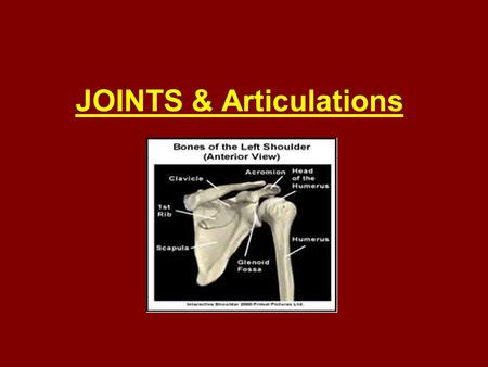 JOINTS & Articulations. Joints occur where 2 bones meet. They may: join two bones with as little flexibility as possible join two bones with a little.