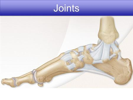 Joints. Copyright © 2010 Pearson Education, Inc. Figure 8.1 Fibrous joints. Dense fibrous connective tissue Suture line Root of tooth Socket of alveolar.