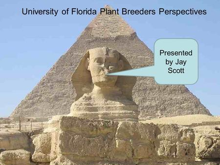 University of Florida Plant Breeders Perspectives Presented by Jay Scott.