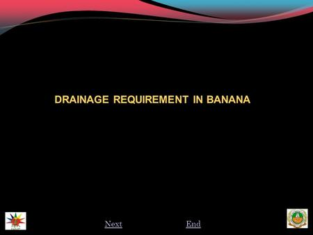 DRAINAGE REQUIREMENT IN BANANA NextEnd. INTRODUCTION  Poor drainage is a major cause of reduced yield and quality of bananas.  In many cases, the effects.