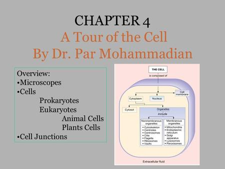 CHAPTER 4 A Tour of the Cell By Dr. Par Mohammadian Overview: Microscopes Cells Prokaryotes Eukaryotes Animal Cells Plants Cells Cell Junctions.