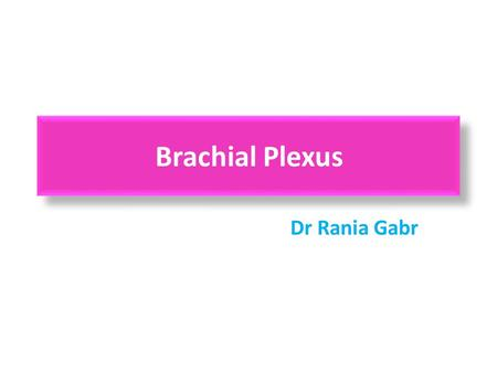 Brachial Plexus Dr Rania Gabr. Objectives Describe the brachial plexus Make a list of contributing spinal nerves. Discuss the general arrangement of this.