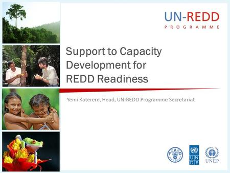 Support to Capacity Development for REDD Readiness Yemi Katerere, Head, UN-REDD Programme Secretariat.