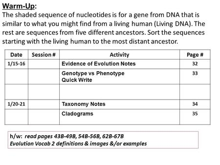 Warm-Up: The shaded sequence of nucleotides is for a gene from DNA that is similar to what you might find from a living human (Living DNA). The rest are.