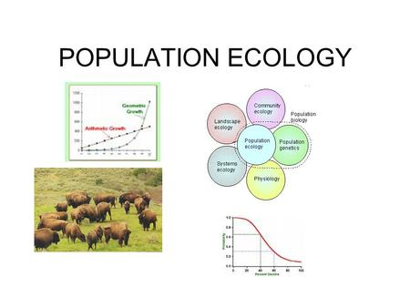 POPULATION ECOLOGY. ECOLOGY Study of living organisms as groups Interactions between living organisms (predator-prey, parasitism etc) Interactions between.