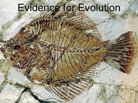 Evidence for Evolution. Darwin argued that living things have been evolving on Earth for millions of years. Evidence for this process could be found: